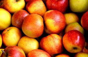 Apfelmus aus der Küchenmaschine